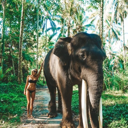 jetset-christina-elephant-picture-southeast-asia-beautiful-bucket-list-blogs
